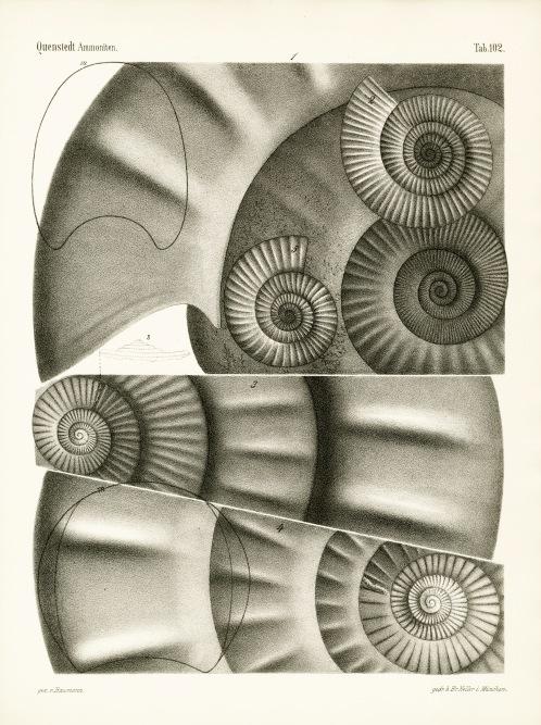 CAS Folio QE 807.A5 Q46 1883 Atlas v.1-3 (1883-85)